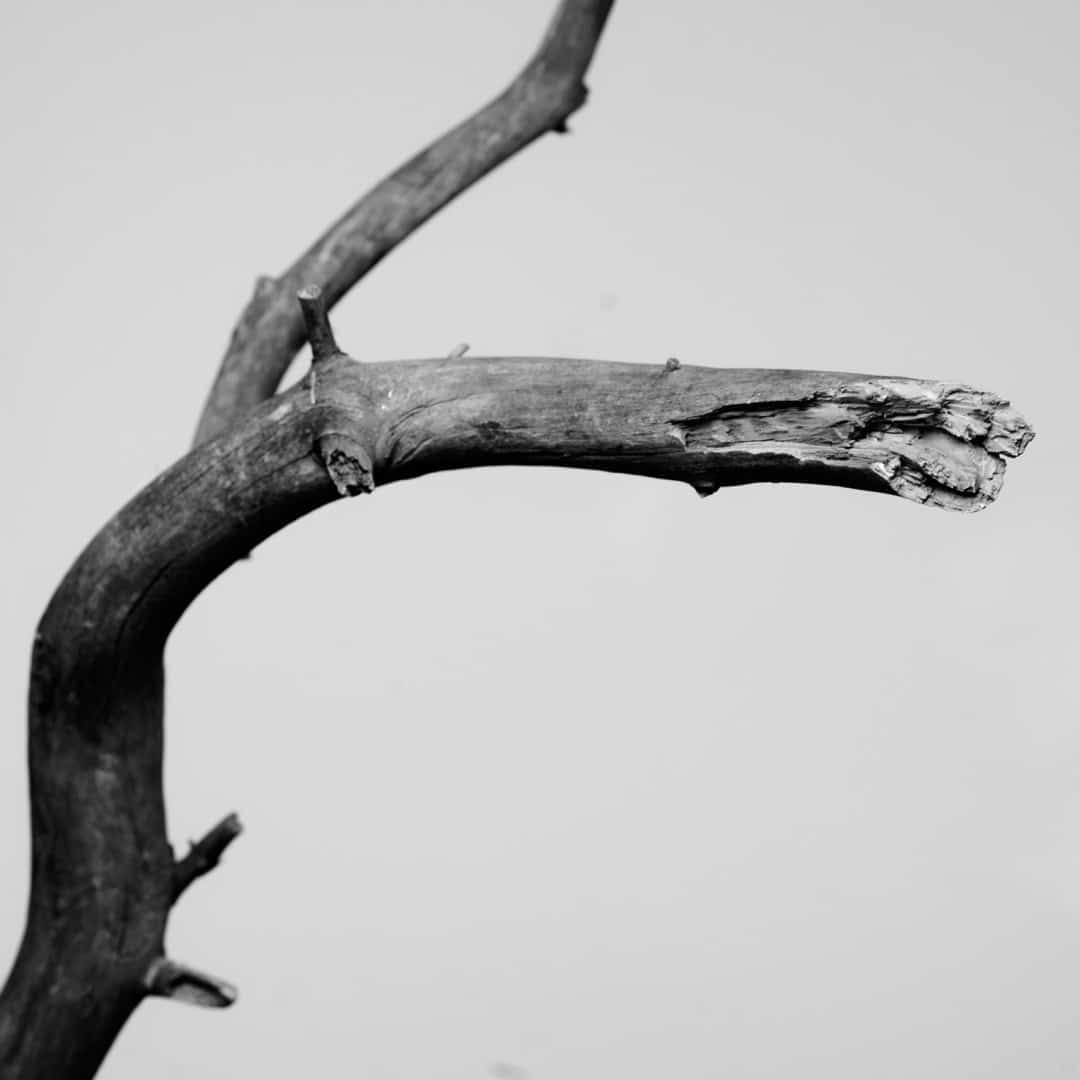 Fine Art Photography 0022