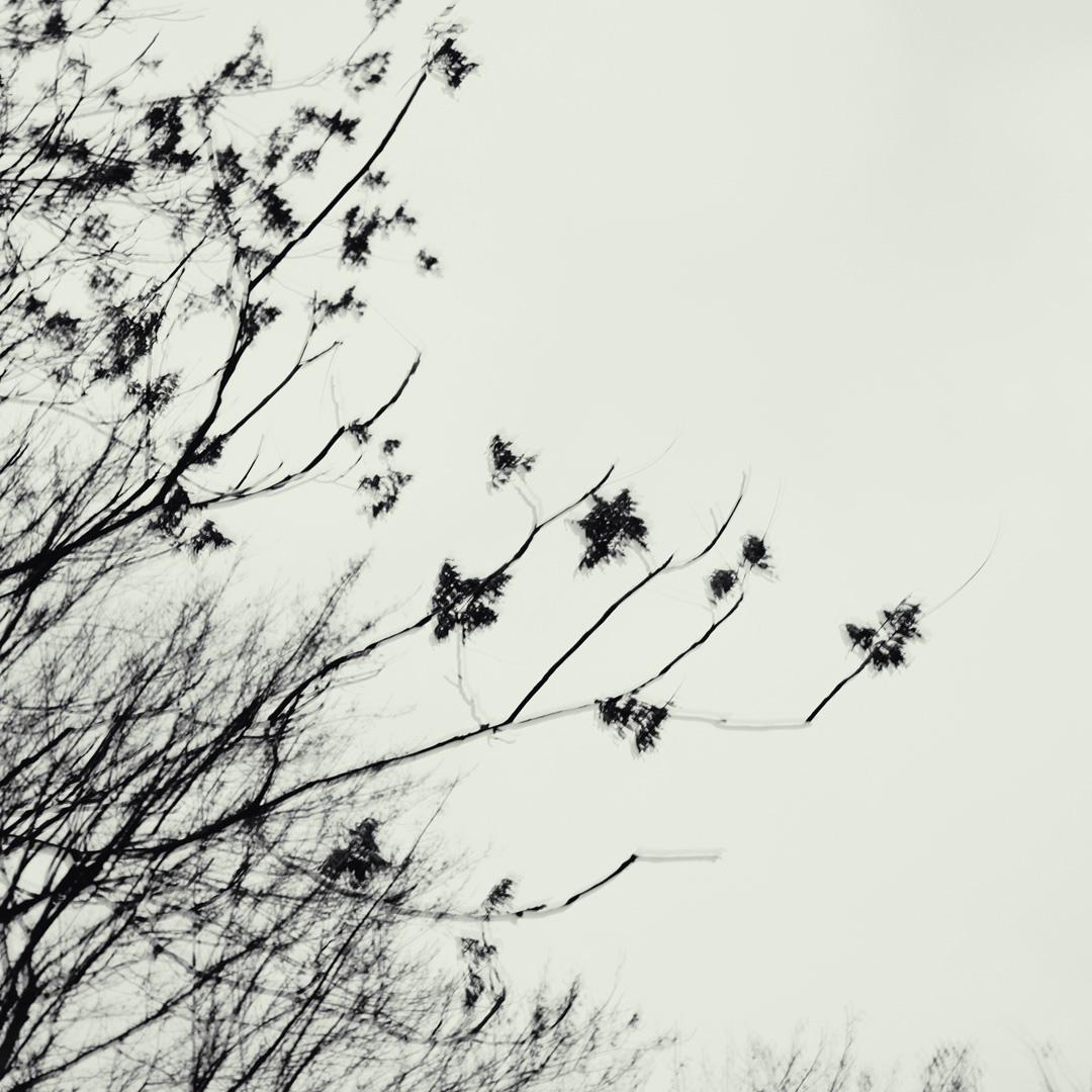 Motiv aus der Konzeptfotografischen Serie Veins