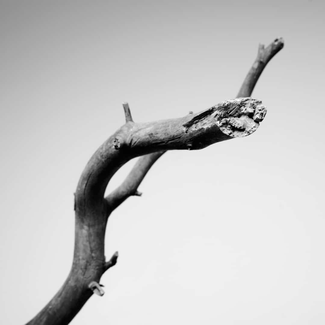 Kunstfotografie Fine Art Photography 0007